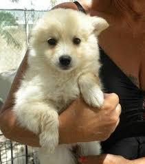 Non Shedding Dogs Small To Medium by Medium Dog Breeds Australia Dog Pet Photos Gallery Pgj27qkb8r