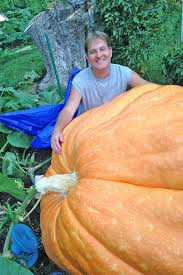 Atlantic Giant Pumpkin Record by Bellevue Backyard Farmer Has Eye On Growing State U0027s Biggest