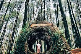 Tempat Wisata HutanPinus Pengger Jogja Ini Berada Di Desa Terong Kecamatan Dlingo Kabupaten Bantul Daerah Istimewa Yogyakarta Dan Jarak Wisataini Dari