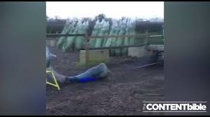 Christmas Tree Baler For Sale by Lad Jumps Through The Christmas Tree Netting Machine And Gets