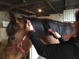 Best Horse Shedding Blade by Solorake Sologroom