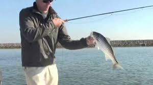 Fly Fishing For Striped Bass - Striper A Legendary Marine Predator ... The Fiberglass Manifesto Introducing Red Truck Glass Tarpon Archives Fly Fishing Co Company 926 Photos 13 Reviews Home Made Rod Carrier Miscellaneous Building A Vault Can Make Your Batmobile Of Tfm Store 12 Tips For Epic Trips On Cheap Gink Switch Techniques Shasta Trout Review Fish California Youtube