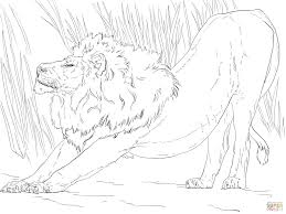 Click The Stretching Lion Coloring Pages To View Printable Version Or Color It Online Compatible With IPad And Android Tablets