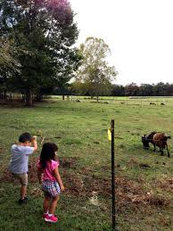 Pumpkin Patch Near Tallahassee Fl by Body Of Light Fit Blog How I Lost My Baby Weight And Gained My