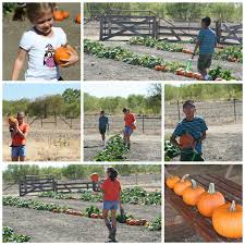 Pumpkin Patch College Station Tx by Reasons For Chocolate October 2015