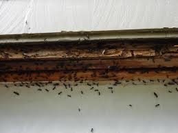 Flying Ants In Bathroom Window by Tiny Ants In Bathroom How To Get Rid Of Ants That Come Through