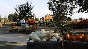 Wheatland California Pumpkin Patch by Davis Ca Real Estate Yolo County Homes For Sale Andrew Skaggs
