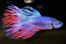 aquarium poisson prix combattant poisson prix vente de poisson d aquarium en ligne vrac it