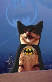 cat batman costume cat in batman costume search email pizzazz lol
