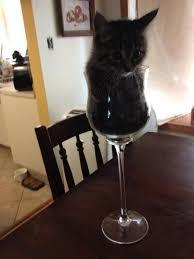 aquarium verre a pied 15 un petit chat dans un petit verre