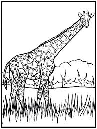 Sophie The Giraffe Colors Color Page Coloring Book