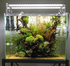 What Is An Aquascaper? Planted Tank Contest Aquarium Design Aquascape Awards How To Create Your First Aquascaping Love Pin By Marius Steenblock On Pinterest The Month September 2008 Pinheiro Manso Creating Nature Part 1 Inspiration A Beginners Guide To Aquaec Tropical Fish Style The Complete Brief Progressive Art Of 2013 Xl Pt2 Youtube Aquadesign Dutch Sytle Aquascape Best Images On Appartment Iwagumi Der Der Firma Dennerle Ist Da Aqua Nano