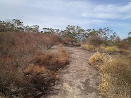 100 Mount Tinbeerwah Climbing Sunshine Coast