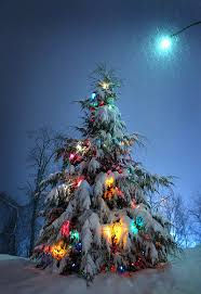 Wadsworth Ohio Christmas Tree Farm by Merry Christmas Christmas Tree Calming And Silent Night