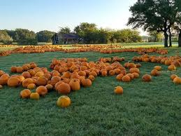 Pumpkin Patch Marble Falls by The Best Pumpkin Patches In And Around Austin Updated