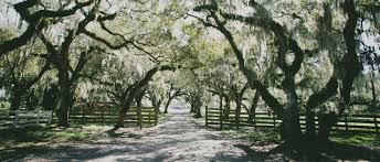 Osceola Memorial Gardens Popular Garden 2017