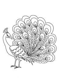Peacock Coloring Pages Photo