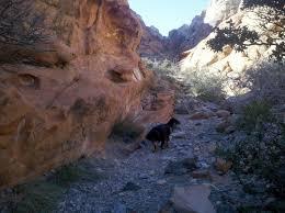 Tule Springs Fossil Beds by Vegas Calico Basin U0026 The Rock Scrambling Dog