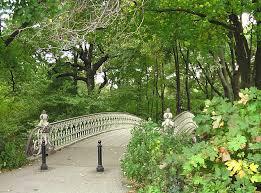 Free tree forest trail bridge leaf flower new york