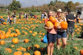 Pumpkin Patch Nashville Area by Best Pumpkin Patch In La For Halloween