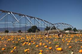 Mccalls Pumpkin Patch Moriarty New Mexico by File Irrigation System 2 Jpg Wikimedia Commons