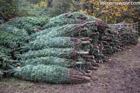 Xmas Tree Farms Albany Ny by Sara It U0027s Momsense