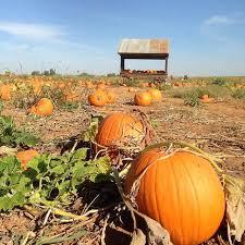 Bishop Pumpkin Farm Hours by The 25 Best Bishops Pumpkin Farm Ideas On Pinterest Pumpkin