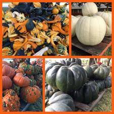 Grapevine Texas Pumpkin Patch by 2016 Mansfield Area Pumpkin Patch U0026 Fall Events Guide Mansfield