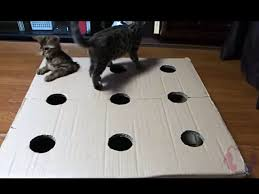 Cat Video Frisky Kittens Play Whack A Mole With Each Other Crafty