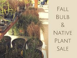 fall bulb plant sale the organic forecast