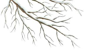 Winter clipart tree branch 15