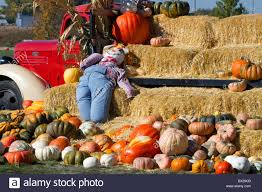 Half Moon Bay Pumpkin Patches 2015 by Scarecrow In Pumpkin Patch Stock Photos U0026 Scarecrow In Pumpkin