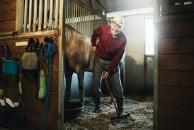 Great Career Options For Working With Horses Barn Willow Jobs Angellist The 25 Best With Horses On The Job Isaiah Blackwell A Stable Manager At High Standard Hiring Trainers 1 Resource For Horse Farms Stables And Manager Career Profile Job Outlook Open Position Stable Assistant Parttime Agape Who Wants To Get Married In An Old Barn Plenty Of Folks Cover Letter Examples Spning Mill Design Hollow Cstruction