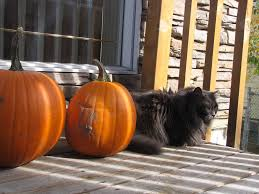 Feeding Dog Pumpkin Constipation by Pumpkin And Your Pet What Are The Benefits