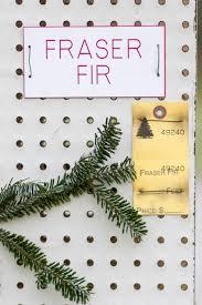 Fraser Fir Christmas Trees Care by Real Christmas Tree St Joe Tree Farm