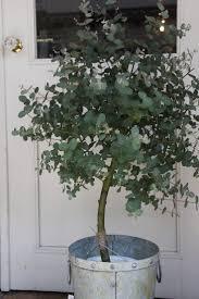 Flocked Christmas Trees Baton Rouge by 20 Best Haining Images On Pinterest Garden Plants Dream Garden