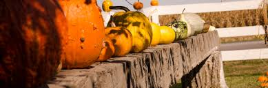 Great Pumpkin Patch Arthur Il by Home The 200 Acres