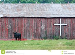 Cow And Barn Stock Image Image