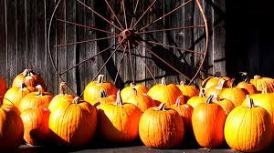 Chesterfield Pumpkin Patch Richmond Va by Local Richmond Ann Vandersyde Virginia Properties Real Estate