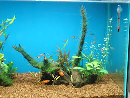 Aquascaping A 50 Gallon Tank | Fish Keeping And Aquascaping Blog Out Of Ideas How To Draw Inspiration From Others Aquascapes Aquascaping Aquarium The Art The Planted Plant Stock Photo 65827924 Shutterstock Continuity Aquascape Video Gallery By James Findley Green With River Rocks Aqua Rebell Qualifyings For 2015 Maintenance And Care Guide Outstanding Saltwater Designs 2012 Part 1 Youtube Dennerle Workshop Fish