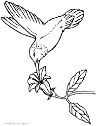 Hummingbird Coloring Book Page Bird Picture