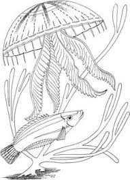 Jellyfish Coloring Pages For Kids