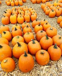 Closest Pumpkin Patch To Marietta Ga uncle shuck u0027s 42 photos u0026 34 reviews farmers market 4520 hwy