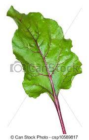 comment cuisiner les feuilles de betterave feuille betterave fond frais blanc racine photographie de stock