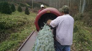 Christmas Tree Farm For Sale Boone Nc by Swfl Christmas Trees Christmas Tree Farm