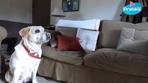 comment empecher chien de monter sur le canapé comment apprendre à votre chien à ne pas monter sur le canapé