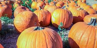 Central Wisconsin Pumpkin Patches by 25 Pumpkin Patches In Alabama You Need To Visit This Fall
