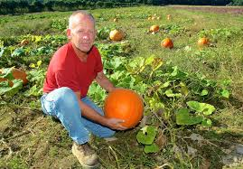 Pumpkin Picking Riverhead by The North Fork In October Sunday Scene