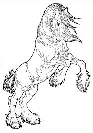 Realistic Rearing Horse Coloring Pages Coloringsuite Com