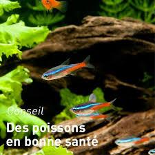 aquarium poisson prix poissons et invertébrés d eau douce aquariums alimentation